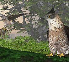 Mountain Hawk-eagle by Ken Gilliland