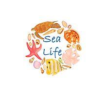 Sea Life Watercolour Illustration Photographic Print