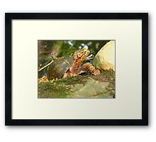 this is MY pond!!! Framed Print