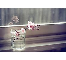 windowsill. first sign of spring. Photographic Print