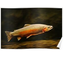 Rainbow Trout - Underwater Log Poster