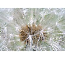 The Beauty of Dandelions Photographic Print