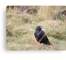 Far From The Madding Crow Canvas Print