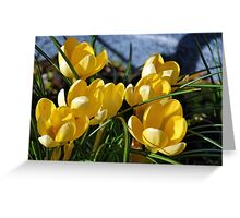 Yellow Crocus............ Greeting Card
