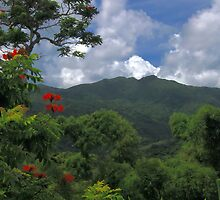Ciales Revealed 02  by lightboxfactory