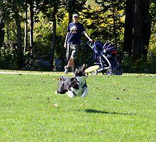 Flying Dog by HALIFAXPHOTO