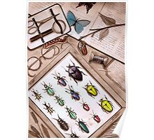 Insect Collector Poster