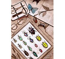 Insect Collector Photographic Print