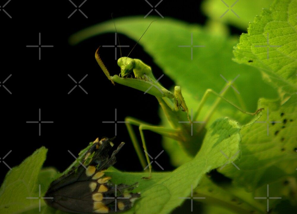 The Dinner Table by Lisa G. Putman