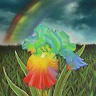 Rainbow Iris by louisegreen