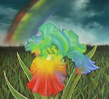 Rainbow Iris by louisegreen