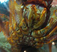 crown lobsters by falsehope