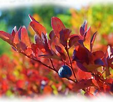Autumn Impressions by Lena127