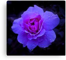 Purple Rose Challenge Canvas Print