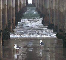 "The Gulls by Lenora ""Slinky"" Regan"