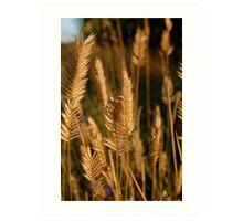 Wild wheat Art Print