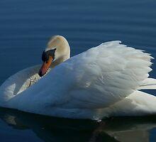 THE BEAUTY OF A SWAN by MsLiz