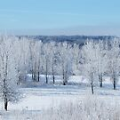 Frosted Iowa Countryside by lorilee