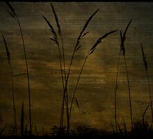 Dusk Silhoutte by Vulcan Spark Studios