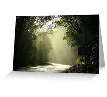 Dawn in Otways Greeting Card