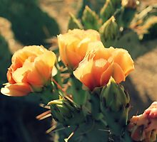 Prickly Pear Blooms by April Larson