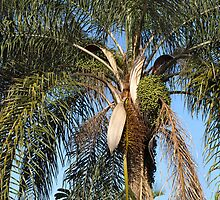 Looking up the Palm Tree by Colin Van Der Heide
