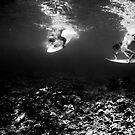 Synchronized Diving  by Rae Marie Threnoworth