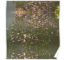 Flowers on 35mm Poster