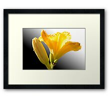 Yellow Day Lily Framed Print