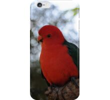 Male Australian King Parrot iPhone Case/Skin