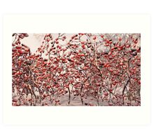 Snow on the Berries Art Print