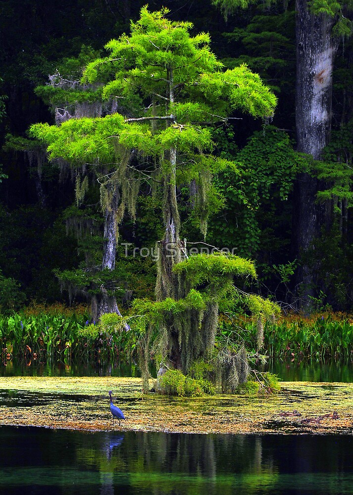 Spring Foliage on Cypress by Troy Spencer