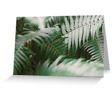 Winter ferns in the morning light. Greeting Card
