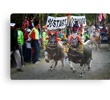Bull races Canvas Print