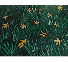 Yellow Flowers  Green Grass Photographic Print