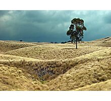Field of Saddle Road Dreams Photographic Print