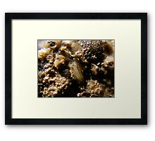 Beach creature Framed Print