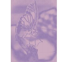 Butterfly Sketch Photographic Print