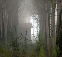 Morning mist in the woods.   by Irene  Burdell