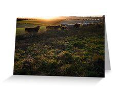 New Barn Farm from White Lane, Twyford Greeting Card