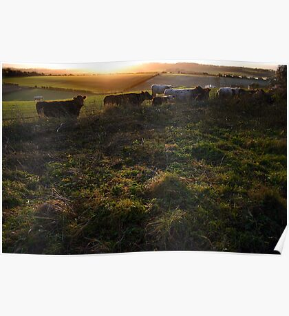 New Barn Farm from White Lane, Twyford Poster