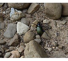 Green Scarab Photographic Print