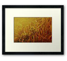 Pantala Naga Pampa Framed Print
