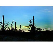 The vineyard Photographic Print