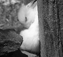 Sunny Bunny by InKibus