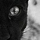 I SPY WITH MY LITTLE EYE.......... by Squealia