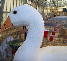 First Place Goose by Glenn Esau