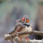 Zebra Finch by NatureGreeting Cards ccwri