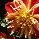 Beautiful Orange Red by Diane Petker