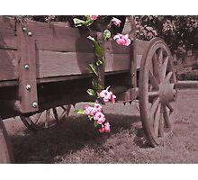 Country Garden  Photographic Print